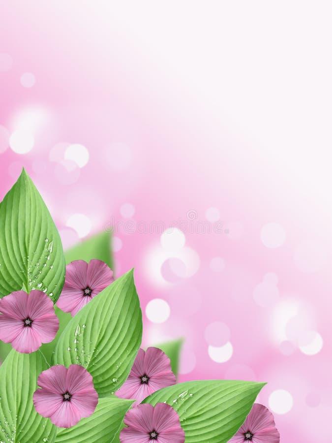 Fleur rose molle et fond vert de bokeh de feuille de hosta avec l'espace vide illustration stock