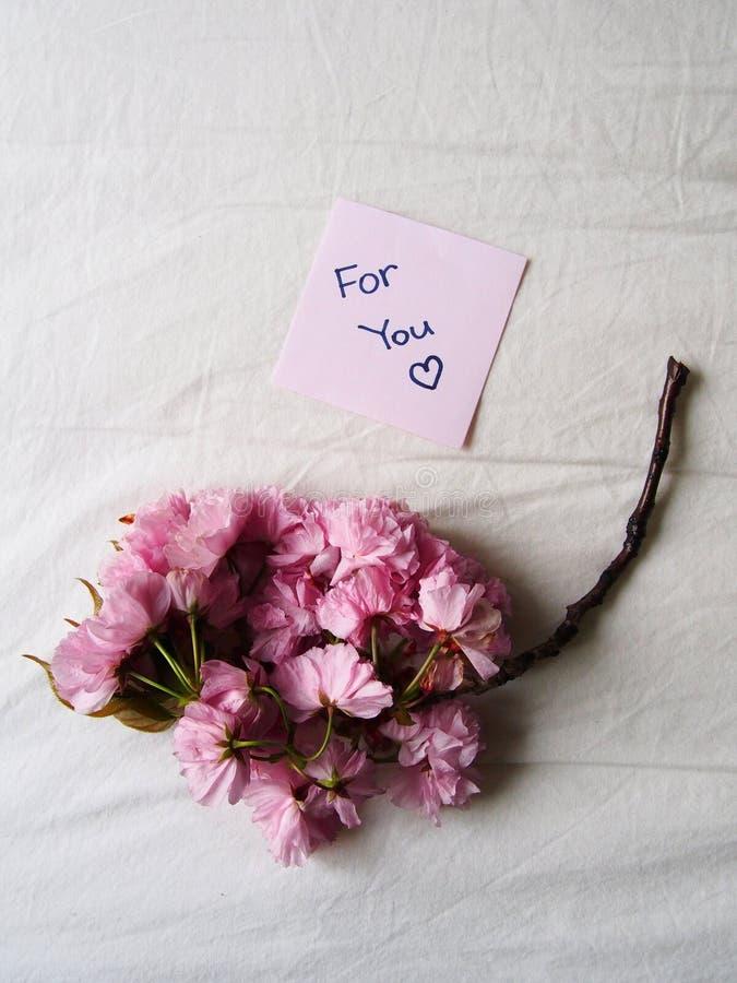 Fleur rose pour vous photo stock