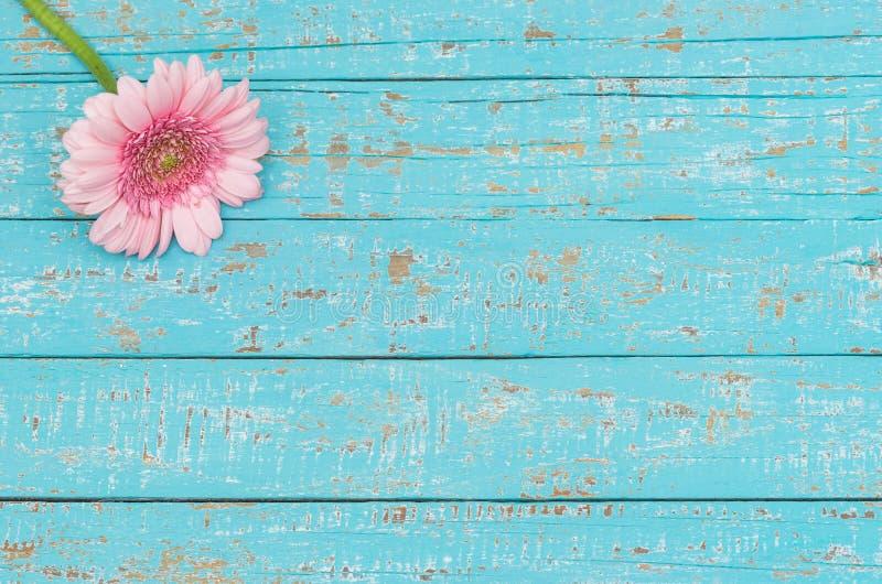 Fleur rose romantique sur le bois de turquoise comme carte cadeaux pour le jour de jour du ` s de Valentine ou de ` s de mère images libres de droits