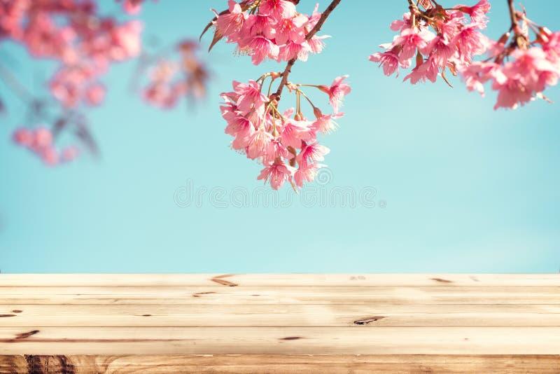 Fleur rose sakura de fleurs de cerisier la saison de fond de ciel au printemps image stock - Greffe du cerisier au printemps ...