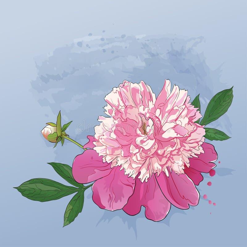Fleur rose sensible de pivoine peinte dans l'aquarelle illustration libre de droits