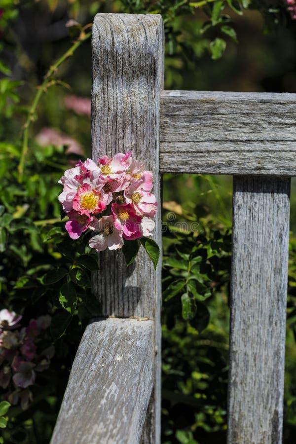 Fleur rose sur le banc en bois images stock