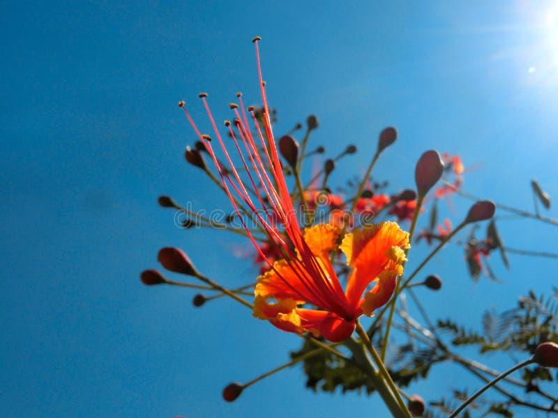 Fleur rouge image libre de droits