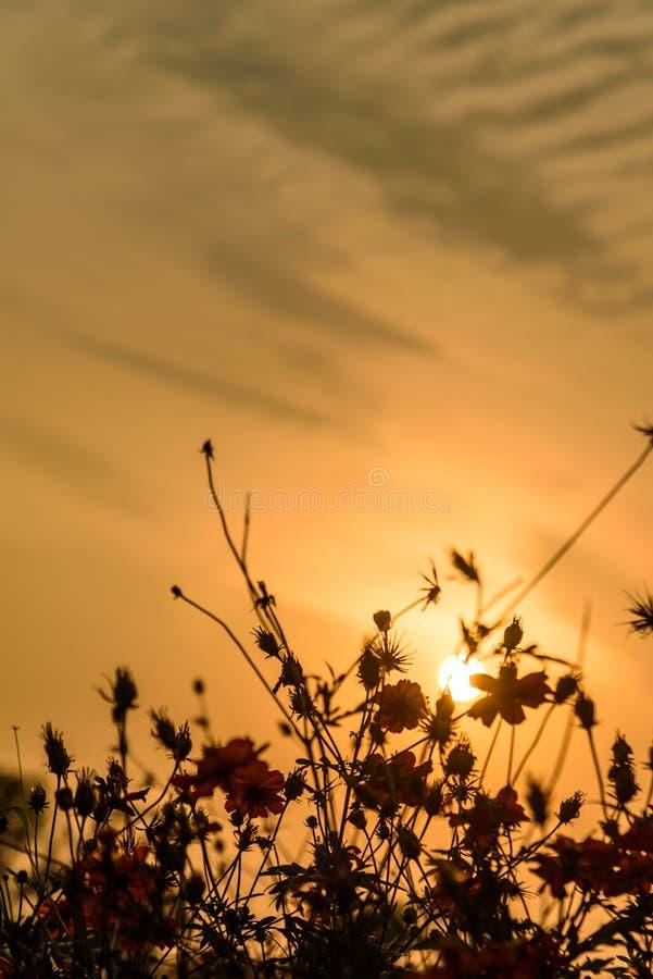 Fleur rouge au crépuscule photos stock