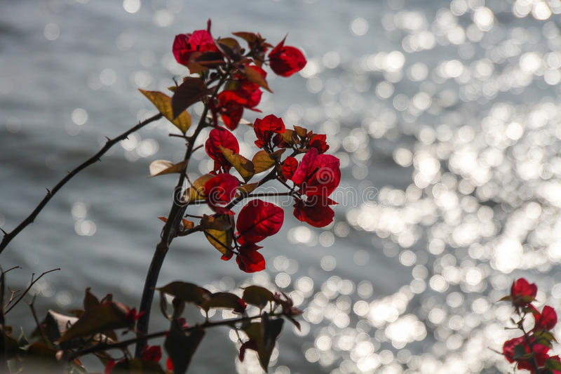 Fleur rouge avec les lames vertes photos stock