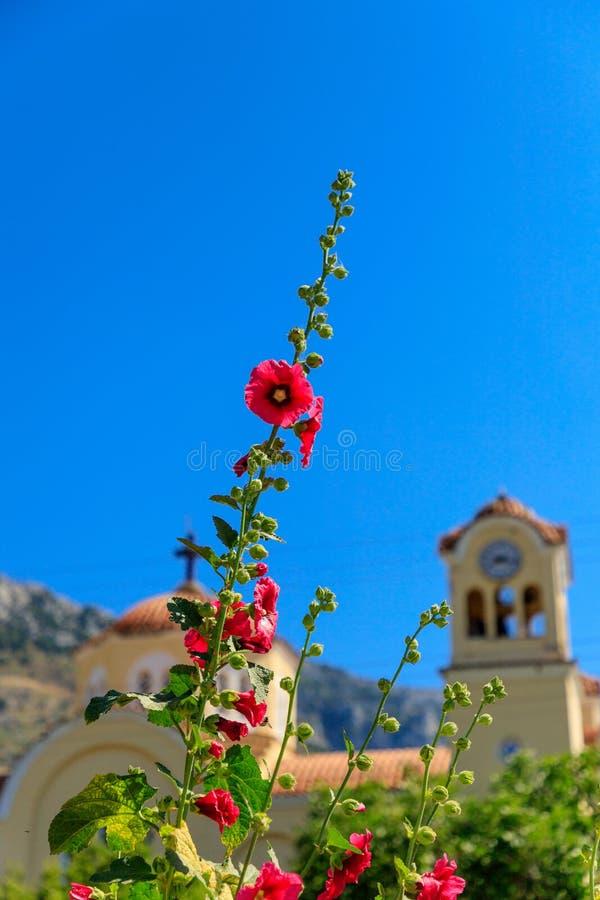 Fleur rouge, ciel bleu avec l'église orthodoxe grecque à l'arrière-plan Cr?te, Gr?ce photos libres de droits