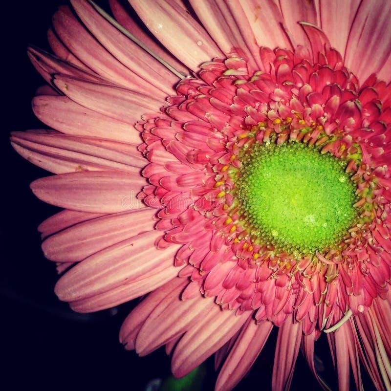 Fleur rouge dans la lueur photos libres de droits
