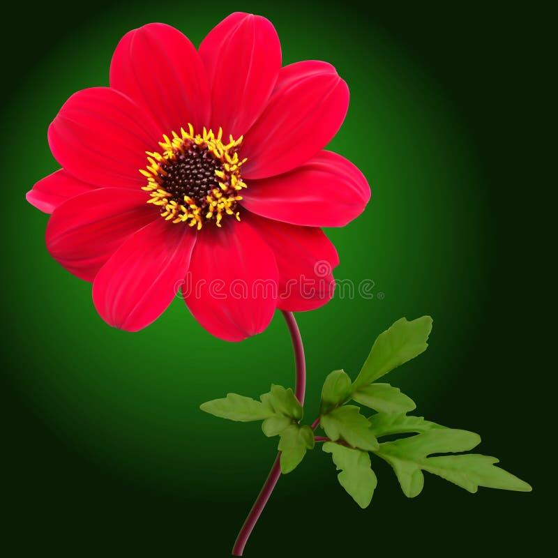 Fleur rouge de dahlia illustration de vecteur