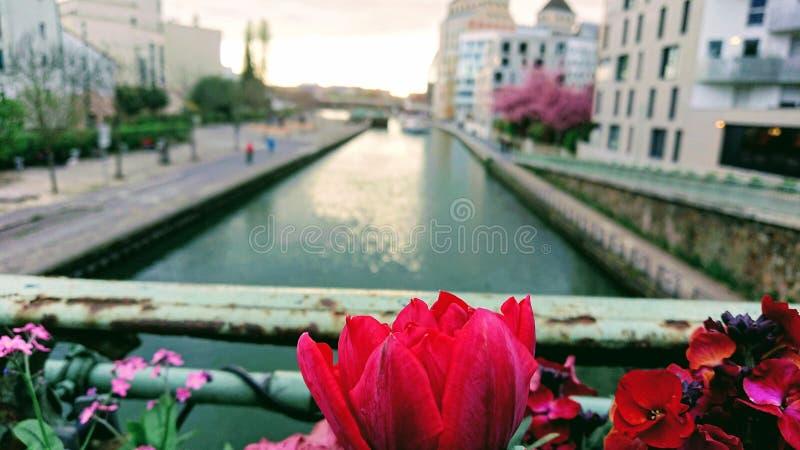 Fleur rouge en rivière photo libre de droits