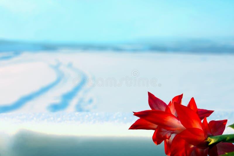 fleur rouge et paysage d 39 hiver photo stock image 37275580. Black Bedroom Furniture Sets. Home Design Ideas