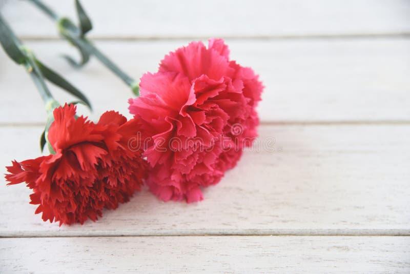 Fleur rouge et rose d'oeillet fleurissant sur en bois blanc photo stock