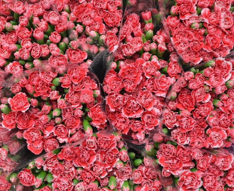 Fleur rouge, fond de bouquet photos libres de droits