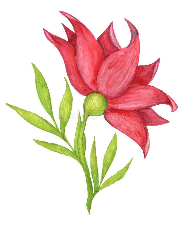 Fleur rouge peinte sur le fond blanc photo libre de droits