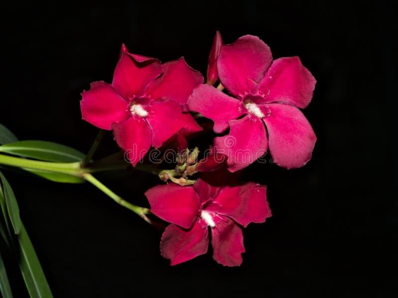 Fleur rouge sur le jardin photographie stock