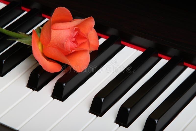 1,276 Fleur Rouge Sur Le Piano Photos libres de droits et gratuites de  Dreamstime