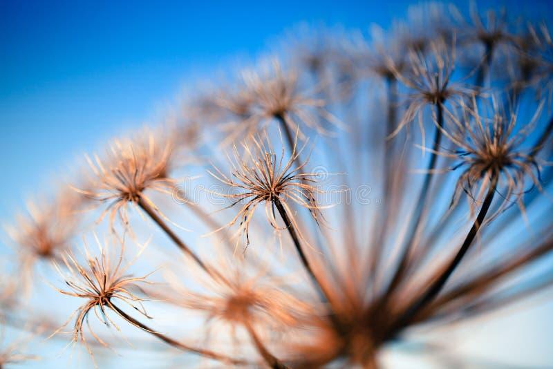 Fleur sèche photographie stock