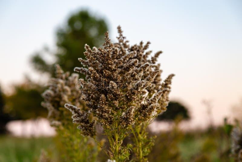 Fleur sèche avec le bokeh gentil photos stock