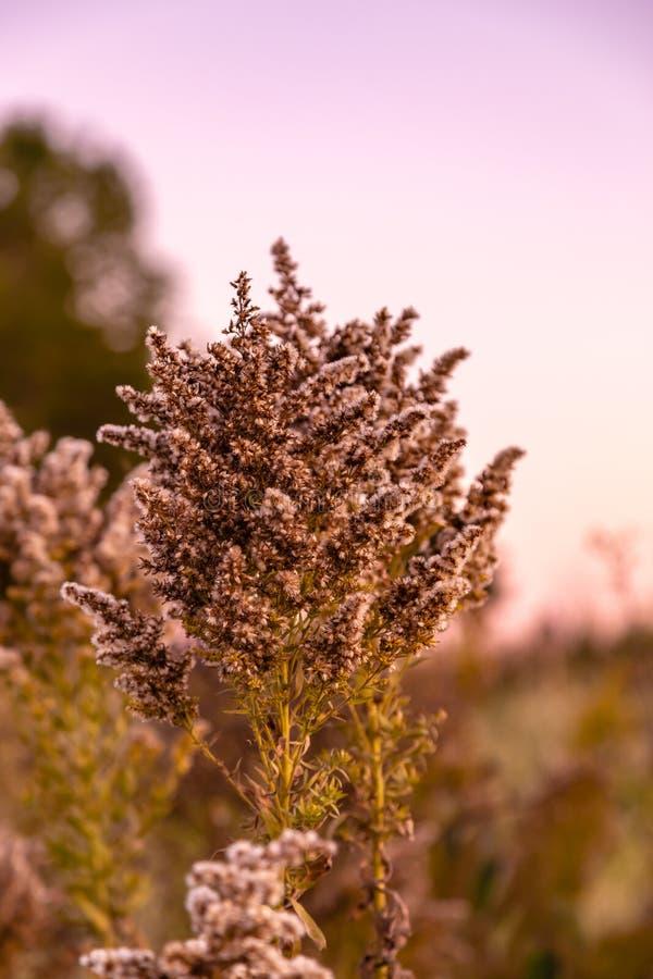 Fleur sèche avec le bokeh gentil photo libre de droits