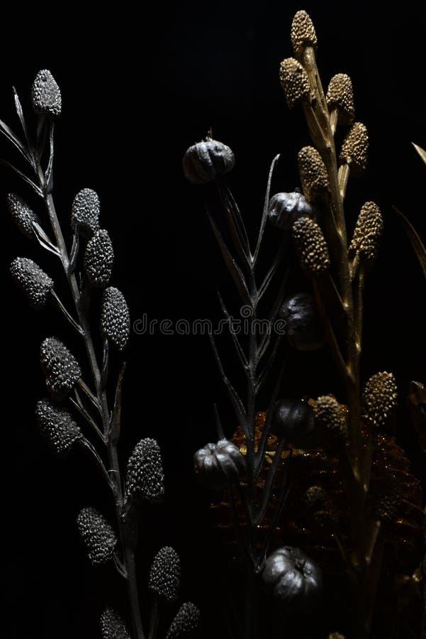 Fleur sèche avec les sangsues et le maïs de pin photographie stock