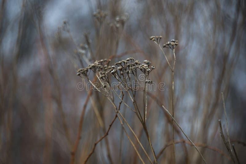 Fleur sèche de chute, fin novembre photos libres de droits