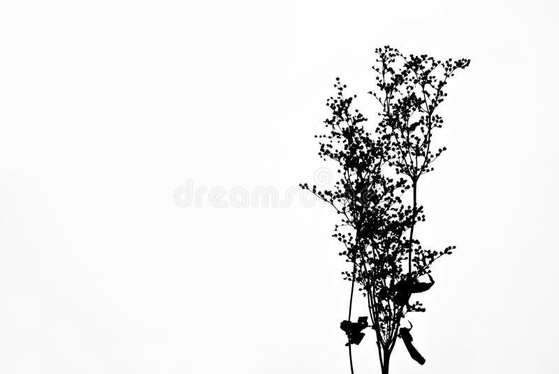 Fleur sèche des mauvaises herbes dans la perspective de la neige blanche photo stock