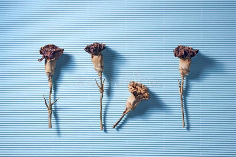 Fleur sèche sur le bleu photos stock
