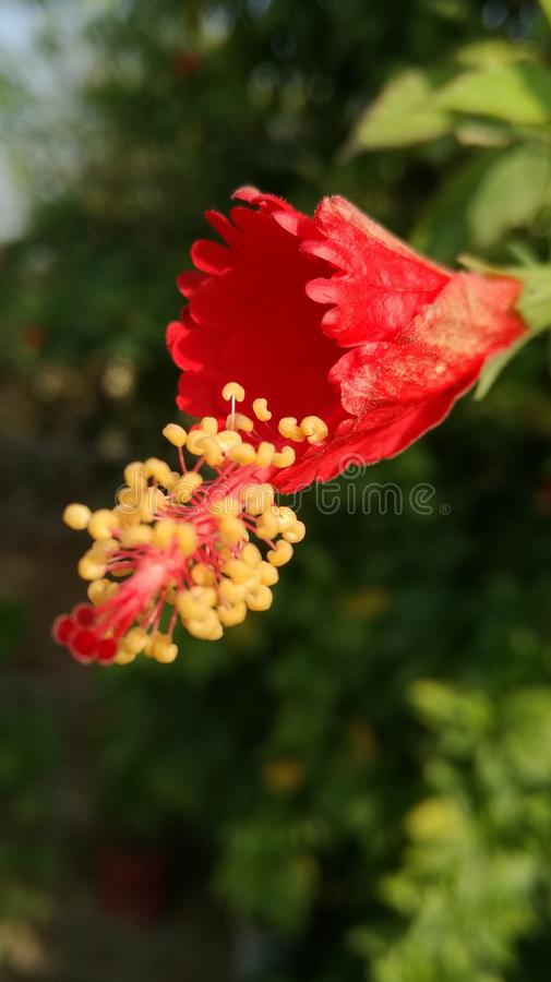 Fleur s photo stock
