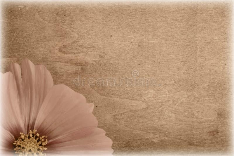 Fleur sale de cru photos stock