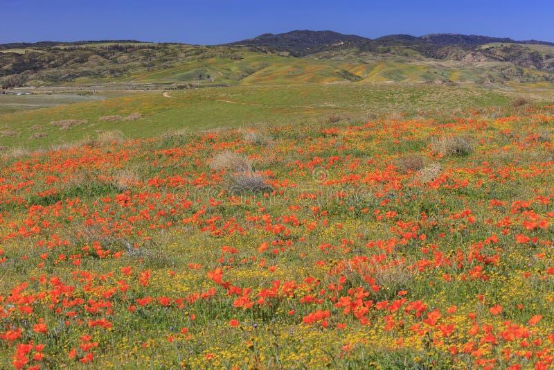 Fleur sauvage à la vallée d'antilope image libre de droits