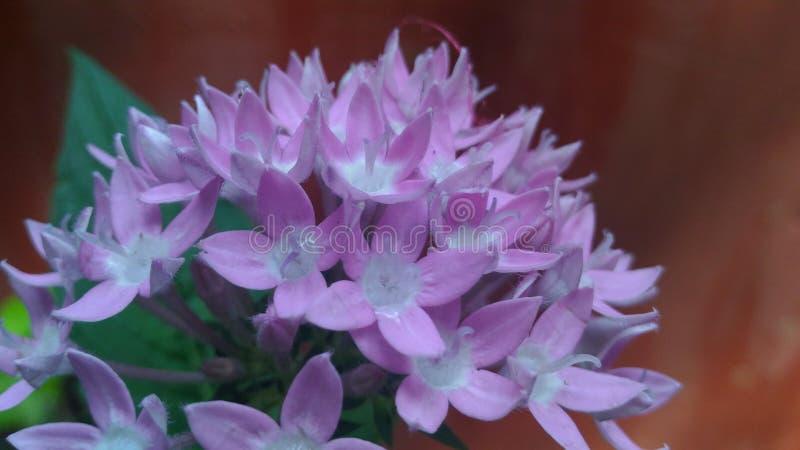 Fleur sauvage photographie stock