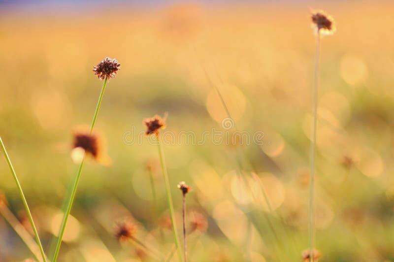 Fleur sauvage photos libres de droits