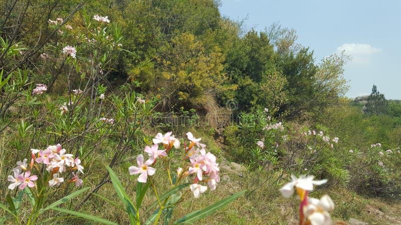 Fleur sauvage image libre de droits