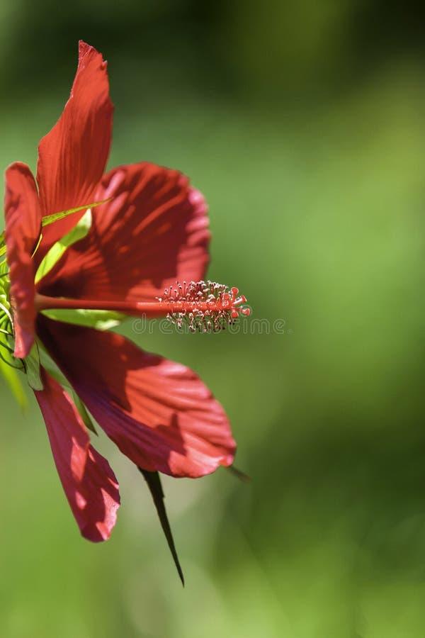 Fleur sauvage au zoo d'OR photographie stock libre de droits