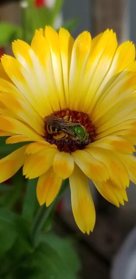 Fleur sauvage d'été photographie stock libre de droits