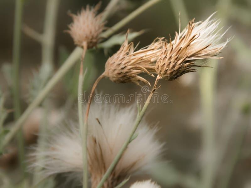 Fleur sauvage dans le vent photos libres de droits