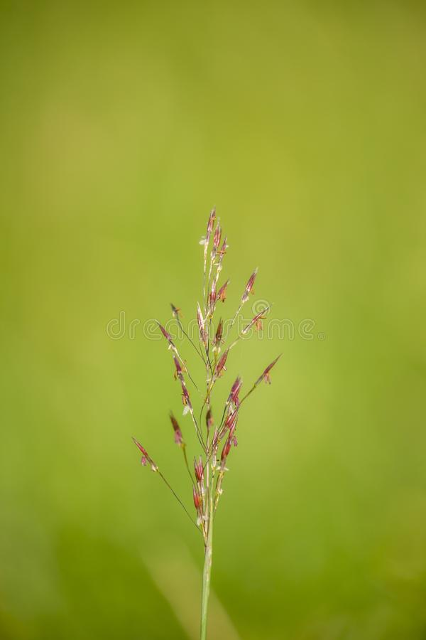 Fleur sauvage en fleurs dans le champ image libre de droits
