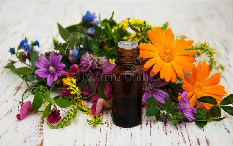 Fleur sauvage et pétrole photos libres de droits