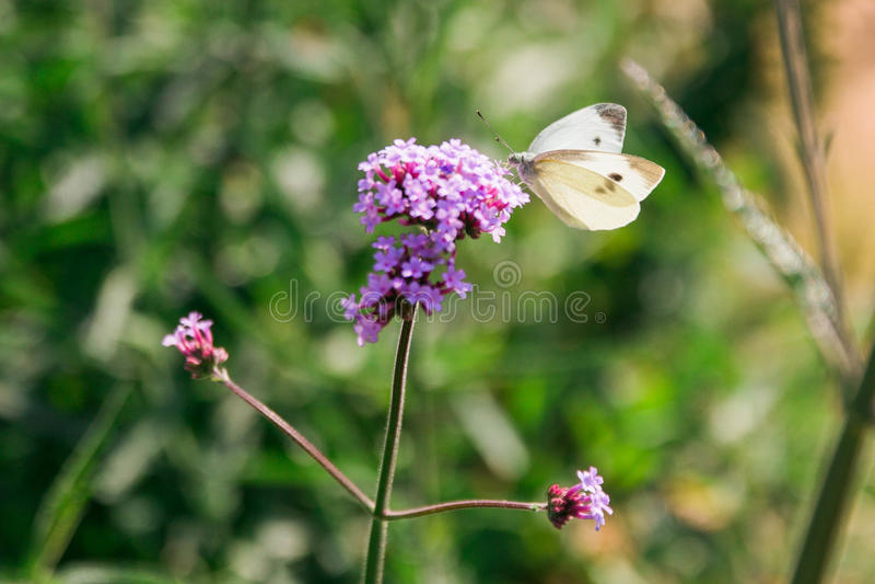 Fleur sauvage pourpre images stock