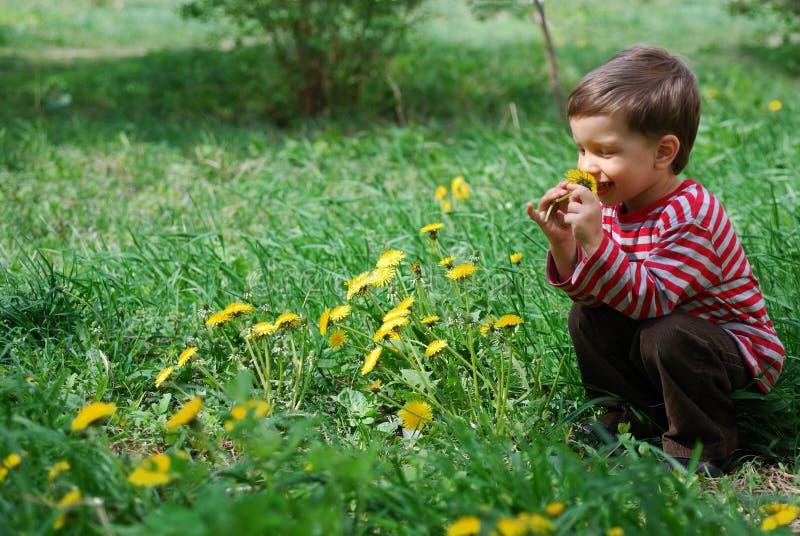 Fleur sentante de pissenlit de garçon photos stock