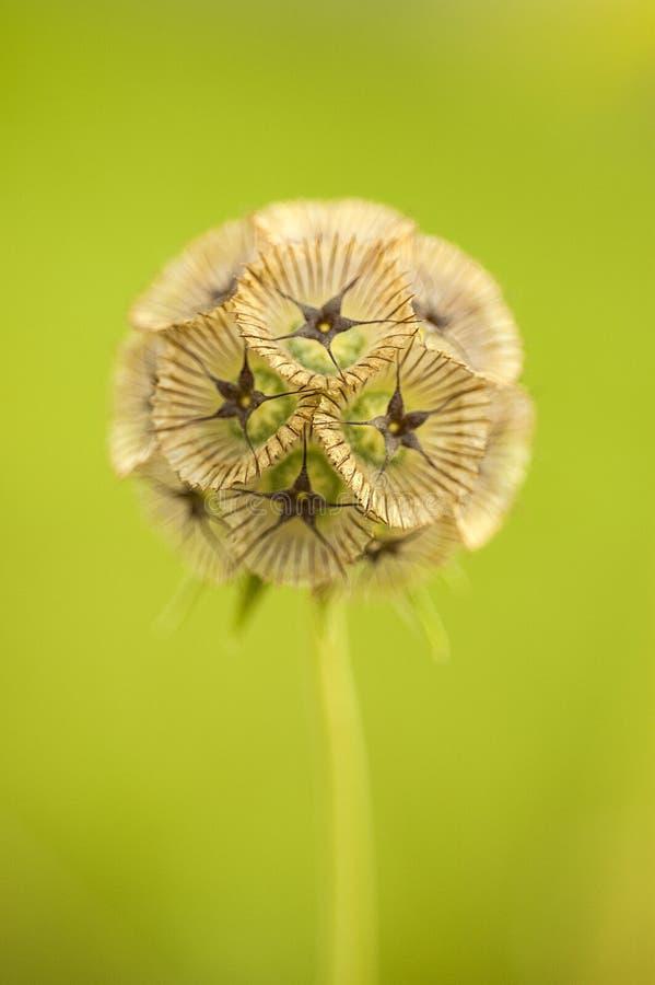 Fleur simple image libre de droits