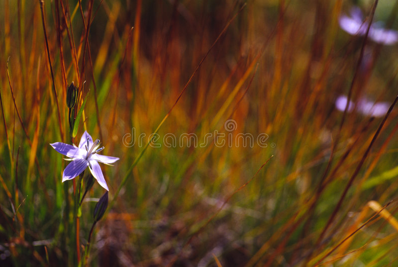 Fleur simple et l'herbe photographie stock libre de droits