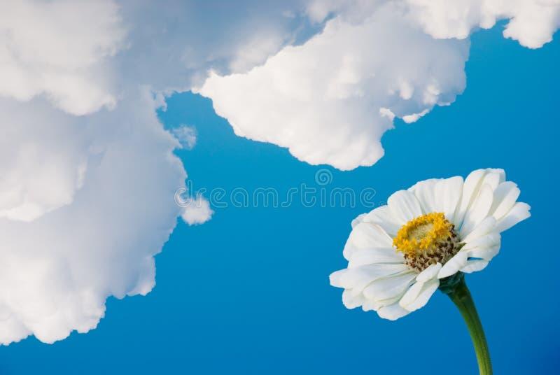 Fleur sous des nuages photo libre de droits