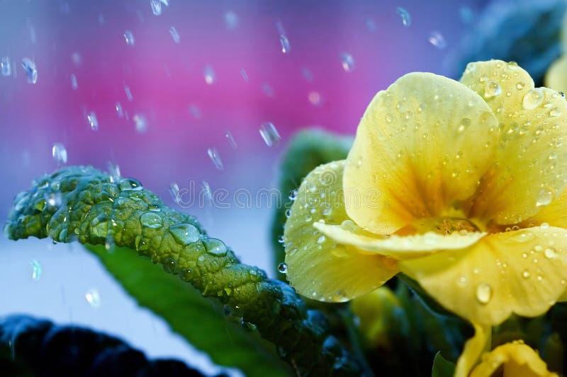 Fleur sous la pluie photo libre de droits