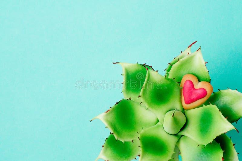 Fleur succulente avec le biscuit de coeur sur le fond de turquoise photo stock