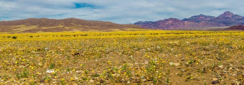 Fleur superbe photos libres de droits