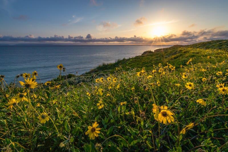 Fleur superbe le long de Catalina Trail photo libre de droits