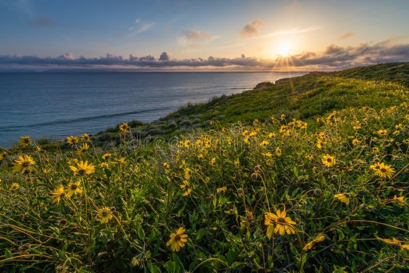 Fleur superbe le long de Catalina Trail photos stock