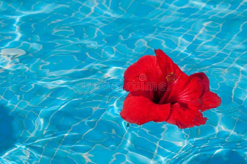 Fleur sur l'eau photo libre de droits