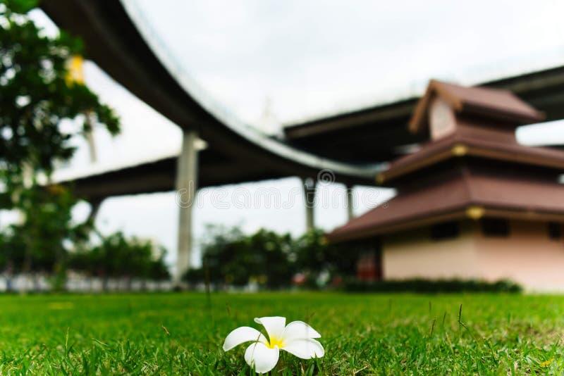 Fleur sur l'herbe dans le jardin sous le tollway photographie stock