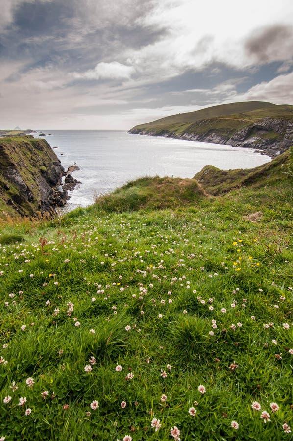 Fleur sur la mer photo libre de droits